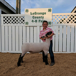 Riecke Club Lambs   Winners